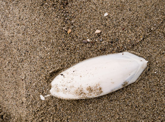 Cuttlefish bone on seashore, beach