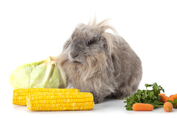 Rabbit with some vegetable isolated on white