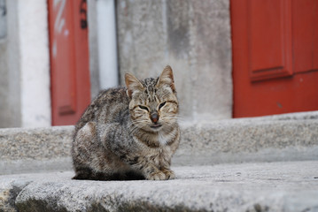 Ugly street cat watching the world go by