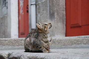 Street cat looking up