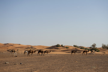 Büyük Sahra Çölü