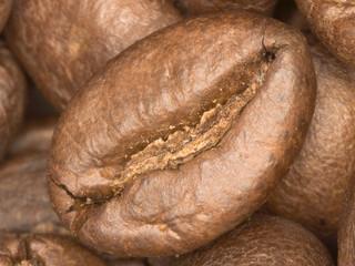 einzelne Kaffeebohne 2