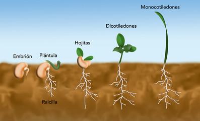 germinación semillas