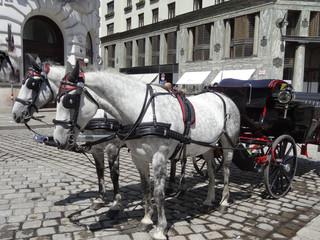 Calèche à Vienne, Autriche