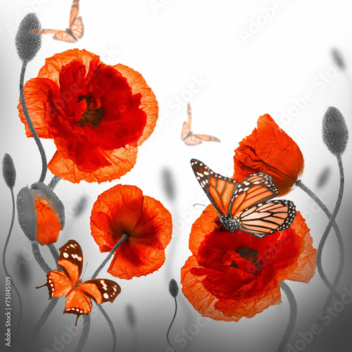 Poster Poppy Red poppies field and blue cornflowers, butterfly