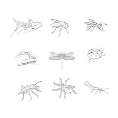 spider, dragonfly, earwig, ant, ladybug, fly, wasp, earthworm, g