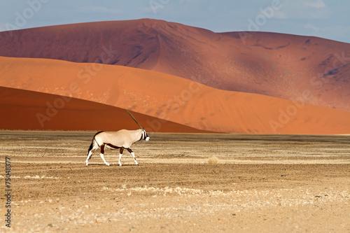 Fotobehang Antilope Sossusvlei park, Namibia