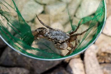 Krabben fangen