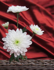 white daisies valentine's background with red satin basket