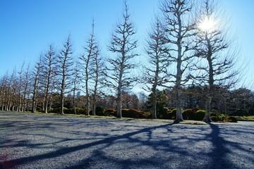 冬枯れの並木