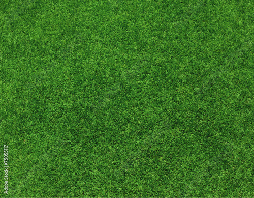 green grass background vector - 75055117