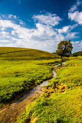 A small stream and tree in a farm field, in rural York County, P