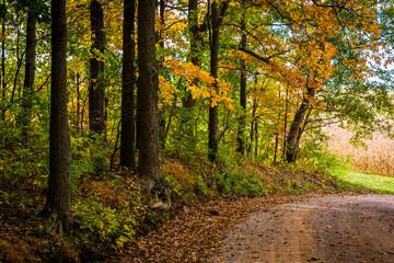Autumn color along a dirt road in rural York County, Pennsylvani