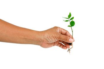 Hand gardening