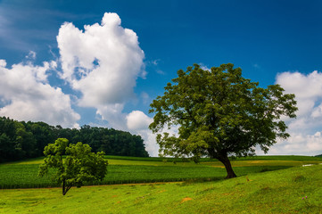 Beautiful partly-cloudy summer sky over trees and farm fields in