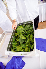 chef holding a bowl with fresh herbs