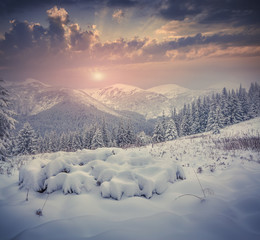 Beautiful winter sunrise with snow covered trees in the mountain