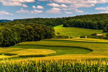 Corn fields and rolling hills in rural York County, Pennsylvania
