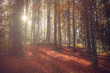 Sun rays through the trees during an autumn day in the forest