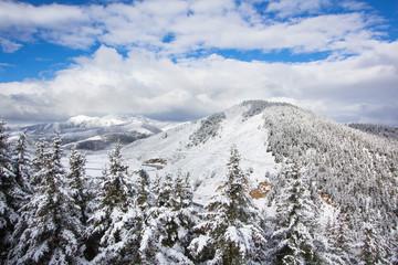 spruce forest around mountain