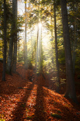 Miracle of light in the forest during autumn