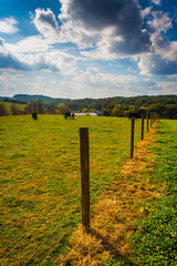 Cows and fence in a farm field in rural York County, Pennsylvani
