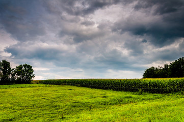 Dark clouds over a corn field in rural York County, Pennsylvania