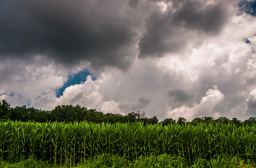 Dark storm clouds over a cornfield in Southern York County, PA.