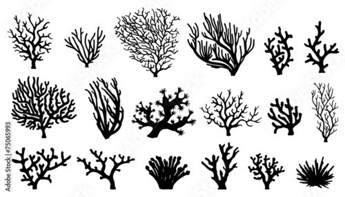 coral silhouettes