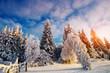 winter landscape trees in frost