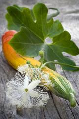 snake gourd (Trichosanthes cucumerina var. anguina)