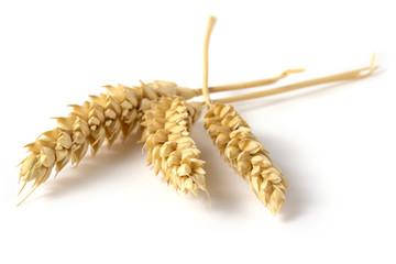 three ears of wheat