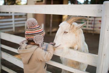 山羊にエサをあげる子供