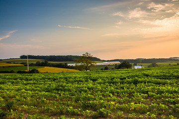 Farm fields and rolling hills at sunset, in rural York County, P