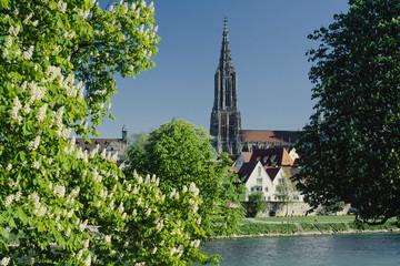 Ulmer Münster und blühende Kastanien