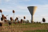 Charente-Maritime - Marsilly Château d'eau et cardères sauvages