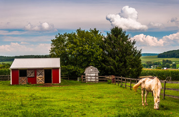 Horse and red stable in a field in Southern York County, Pennsyl
