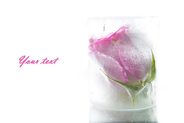 Rosebud in ice, with space for text