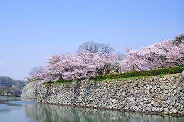 姫路城のお堀と桜