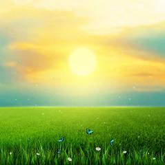 Summer, Field, Sky, Sun, Grass, Flower And Butterflies
