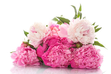 beautiful pink peonies