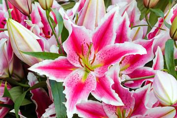Amaryllis flowers.