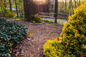 Spring garden scene under evening light