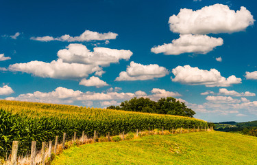 Summer clouds over corn field and fence in rural York County, Pe