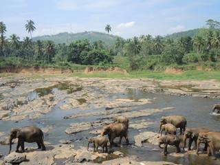 Pinnawela,Sri Lanka