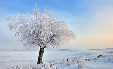 hoar-frost on tree in winter