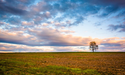 Sunset over a lone tree in a farm field in rural York County, Pe