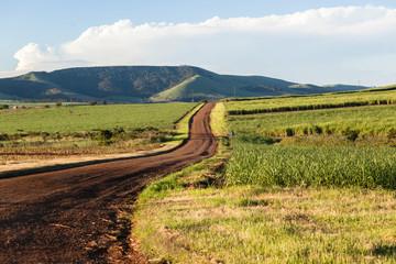 Farming Road Landscape