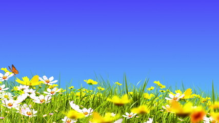 Blue skies and green meadow