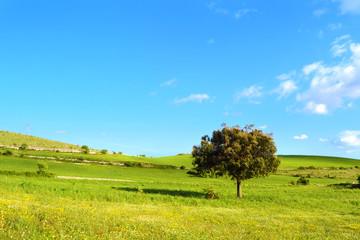 Collina con prato verde e cielo azzurro e un albero di quercia